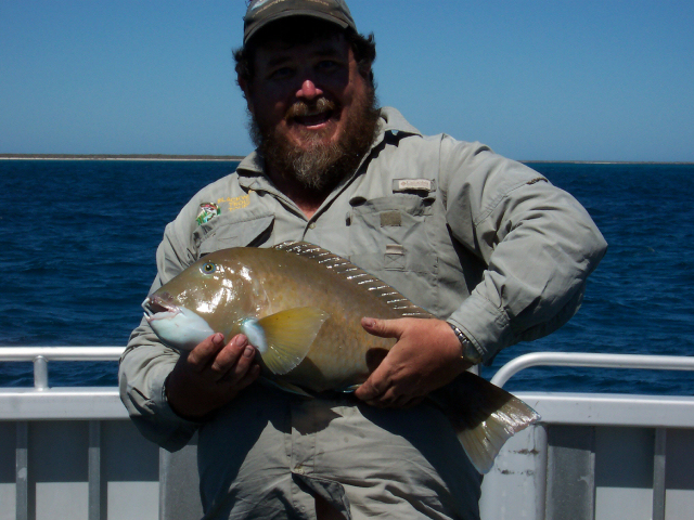Shann&#039;s Abrolhos Bluebone!